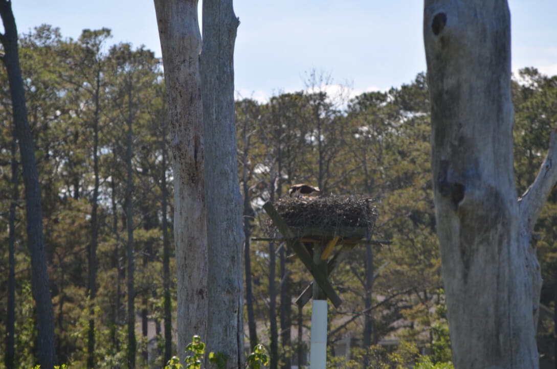 Nature Center Bird on Nest - 4 Fun Things to Do in Bethany Beach Delaware