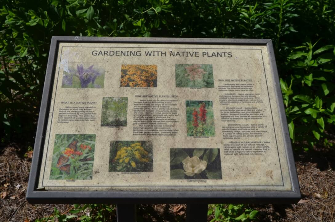 Native Plant Sign- 4 Fun Things to Do in Bethany Beach Delaware