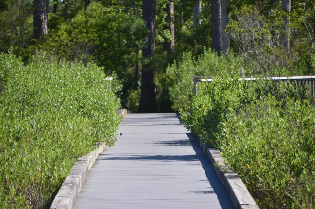 Nature Center Walking Path - 4 Fun Things to Do in Bethany Beach Delaware