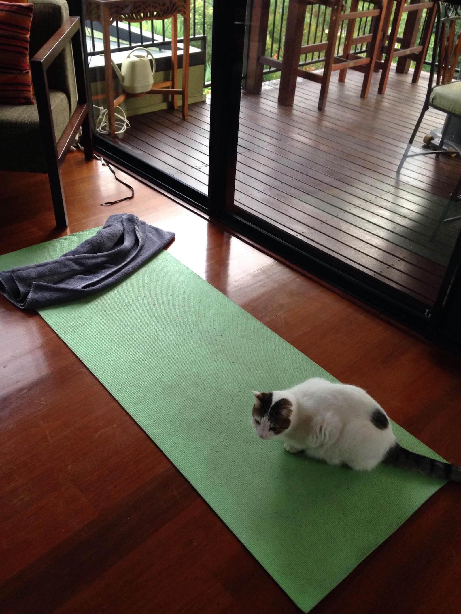 yoga mat and cat
